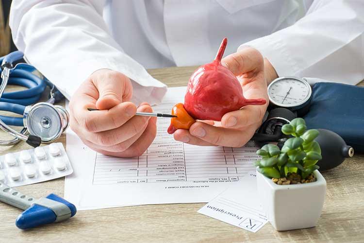 Ein Arzt erklärt den Aufbau eines Organs. ACTICORE kann bei Problemen mit der Sexualität helfen.
